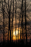 Sunset in the winter forest. Orange sunset behind trees silhouettes royalty free stock photography