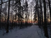 Sunset in winter forest. The photo shows a beautiful red sunset in the winter forest. Russian forest with birch, pine Stock Photos