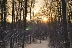 Sunset in the winter forest and the road.  Royalty Free Stock Photo