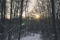 Sunset in the winter forest and the road.  Stock Image