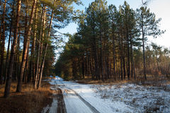 Sunset in  winter forest and road Royalty Free Stock Images