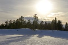 Sunset in a winter forest. Scenic sunset in a winter forest Stock Photos