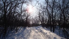 Sunset in the winter forest. Shadows of the trees fall on the road. Covered with snow Royalty Free Stock Image