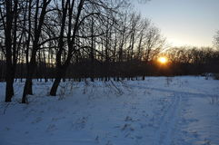 Sunset in the winter forest. Snow Royalty Free Stock Photos