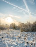 sunset in the winter forest/Snowy fir trees in winter forest at stock image
