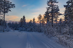 Sunset in the winter forest. In South Yakutia, Russia Royalty Free Stock Photography