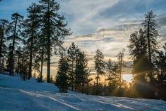 Sunset in winter forest. Sun rays lighting through fir trees Stock Photo
