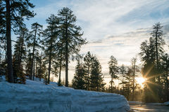 Sunset in winter forest. Sun rays lighting through fir trees. Road passing through snow Royalty Free Stock Images