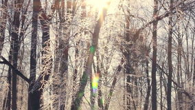 Sunset in winter forest. Sun shine through tree branches covered with snow stock video footage
