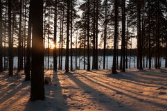 Sunset in the winter forest. Sunbeams and shadows of trees. Sunset in the winter forest. Sunbeams backlight and shadows of trees stock image