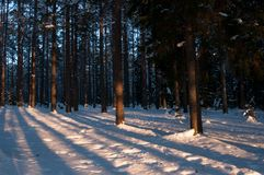 Sunset in the winter forest. Sunbeams and shadows of trees. Tranquil landscape stock photography