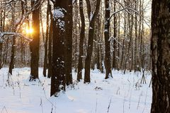 Sunset in winter forest. With snow and sun rays and dark trees Stock Photography