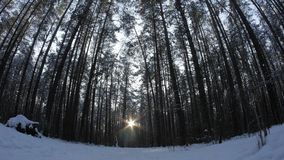 Sunset in winter forest. stock video footage