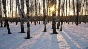 Sunset in the winter forest stock video footage