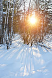 Sunset in the winter forest Royalty Free Stock Image