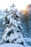Sunset at winter forest Stock Photography