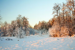 Sunset in winter, Frost on trees. Stock Photography