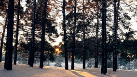 Sunset in the winter frosty Christmas forest. Sunset in the wood between the trees strains in winter period stock footage