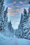 Sunset winter lane Stock Photo