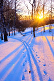 Sunset in a winter park. Beautiful sunset in a winter park, Russia Stock Images