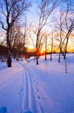 Sunset in winter park. Beautiful sunset in a winter park Royalty Free Stock Image