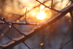 Sunset in winter park Stock Photography