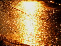 Sunset on a frozen pond. Sunset in the winter on the river the sun is already setting over the horizon and all bathed in gold it seems that the moment stopped royalty free stock photo