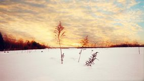 Sunset in winter at snow field stock footage