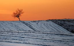 Lonely tree with orange sunset in winter season Stock Photography