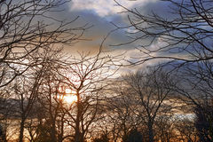Sunset in winter. Trees, ambience Royalty Free Stock Photo