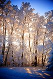 Sunset Winter wonderland. Sunset through the icy trees in Fort Saint John Royalty Free Stock Images