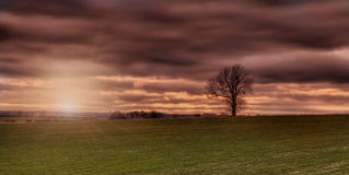 Sunset on the wolds Lincolnshire with tree. Sunset on the Lincolnshire wolds with tree silhouette Royalty Free Stock Photos