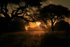 Sunset Wonder - African Nature and Beauty Background Royalty Free Stock Images