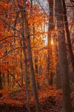 Sunset on a wooded trail during autumn. Sunset on a wooded trail during a beautiful autumn day royalty free stock photo