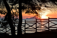 Sunset through wooden fence below pine trees in Sithonia Royalty Free Stock Images