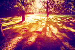 Sunset in the Woods. Vintage style photo of Trees casting large shadows in the woods stock image