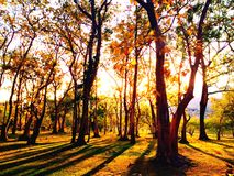 Sunset. In woods Stock Photos