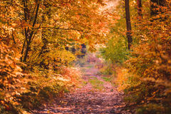 Sunset in the woods. Autumn forrest landscape in Poland, Europe royalty free stock photography