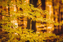 Sunset in the woods. Autumn forrest landscape in Poland, Europe Royalty Free Stock Photos