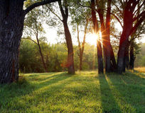 Sunset in the woods Royalty Free Stock Photos