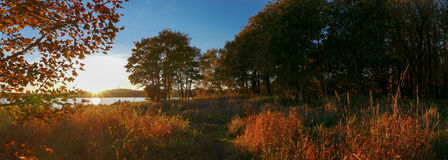 Sunset woods during autumn - Panorama picture Royalty Free Stock Photos