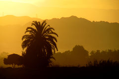 Sunset yellow light above the palm tree and mountains Royalty Free Stock Photo