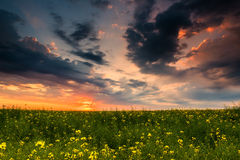 Sunset in yellow rapeseed field Stock Photo