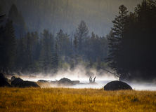 Sunset in Yellowstone National Park Stock Photography
