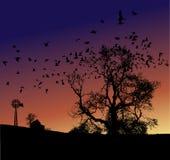 sunset z gospodarstw rolnych ilustracja wektor