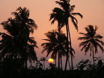 Sunset1 Royalty Free Stock Photography