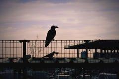 sunsetand κοράκι Στοκ φωτογραφία με δικαίωμα ελεύθερης χρήσης