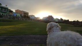 Sunsetdog miasta stary miasteczko Obraz Stock
