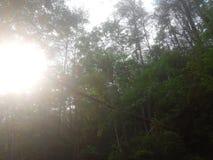 Sunseting bak stupade träd Royaltyfri Foto