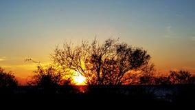 Sunsets πίσω από το δέντρο Στοκ φωτογραφίες με δικαίωμα ελεύθερης χρήσης